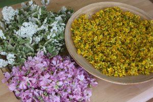 wilde Teepflanzen / Kräuterspaziergang @ BIO-Kräutergarten Elke Piff
