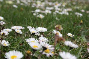 Frühlingskräuter - Kräuterspaziergang @ BIO-Kräutergarten Elke Piff
